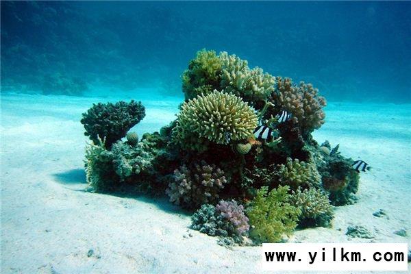 梦见海底是什么意思