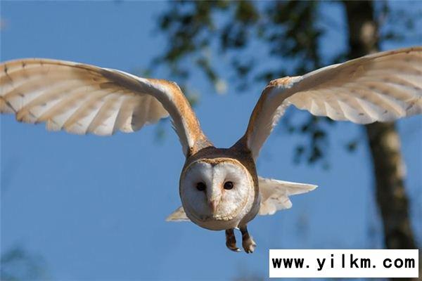 梦见翅膀是什么意思