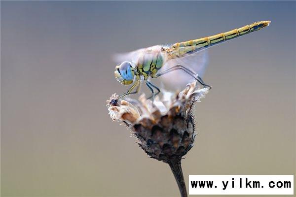 梦见抓蜻蜓是什么意思