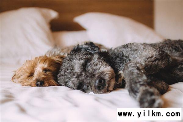 梦见狗交配是什么意思
