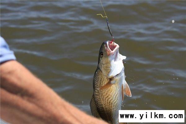 梦见钓鱼钩是什么意思