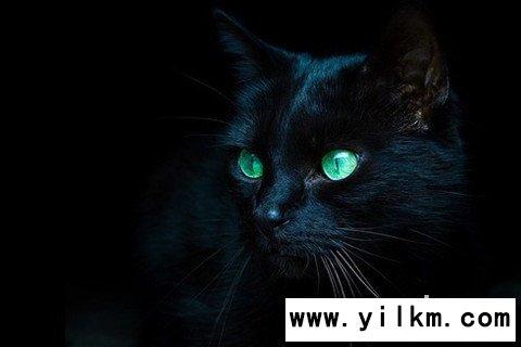 梦见浑身是血的黑猫