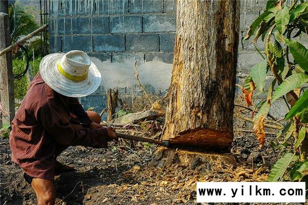 梦见砍伐大树是什么意思