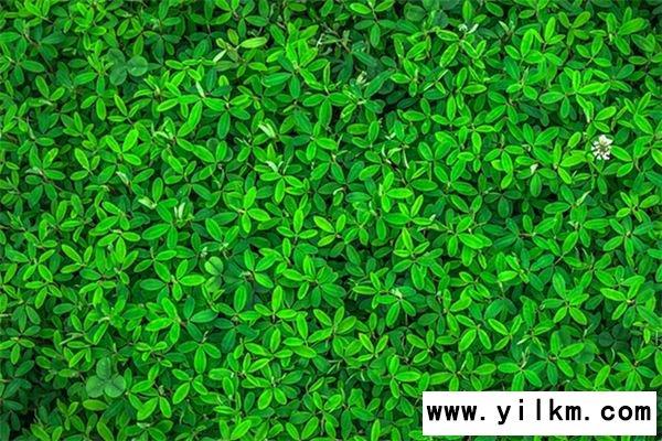 梦见绿色是什么意思