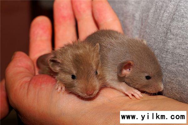 梦见抓老鼠是什么意思
