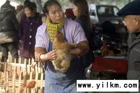 梦见买鸡 卖鸡 抱鸡