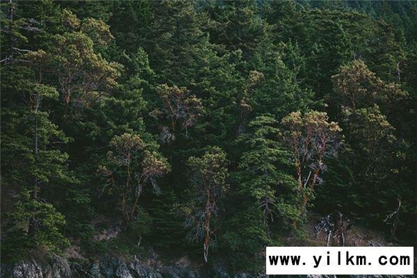梦见树木茂盛是什么意思