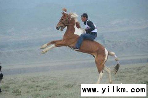 梦见骑着马奔跑