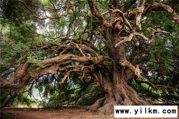 梦见树皮是什么意思