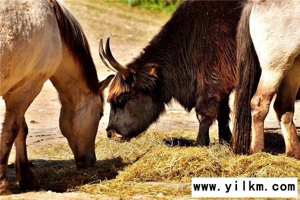梦见马牛是什么意思