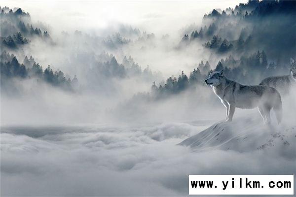 梦见虎狼是什么意思