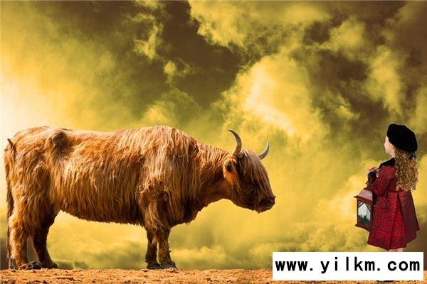 梦见小公牛是什么意思