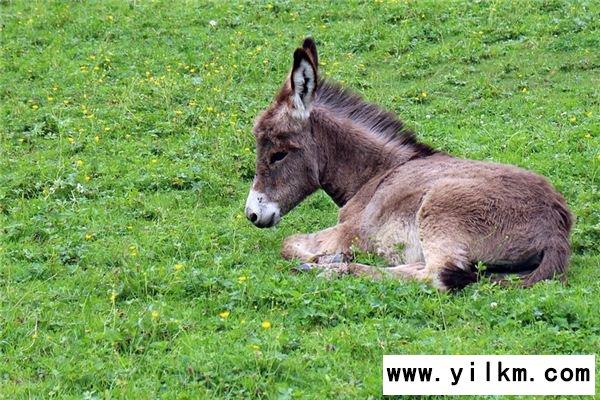 梦见驴骡是什么意思