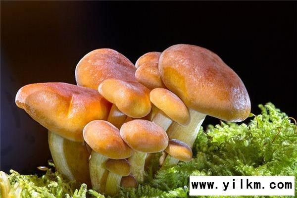梦见买蘑菇是什么意思