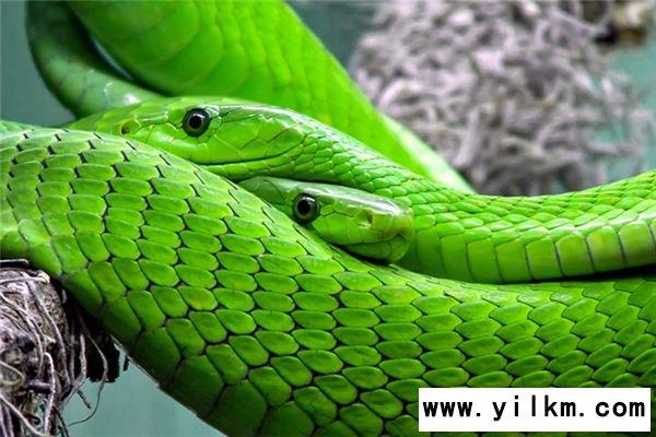 梦见蛇杀死人是什么意思