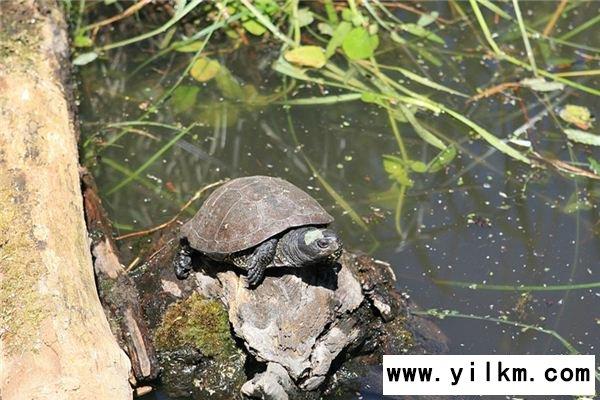 梦见龟鳖是什么意思