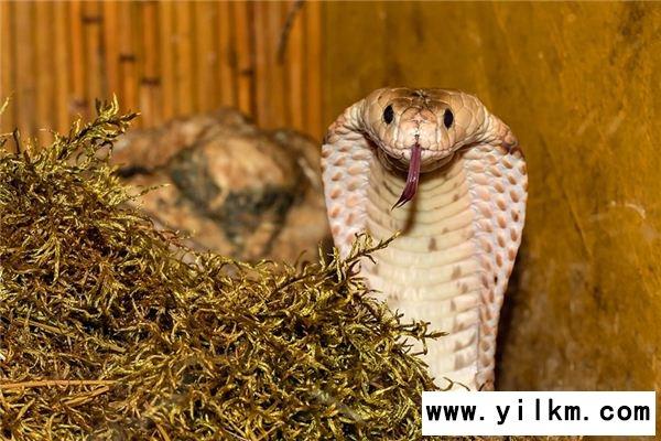 梦见小毒蛇是什么意思