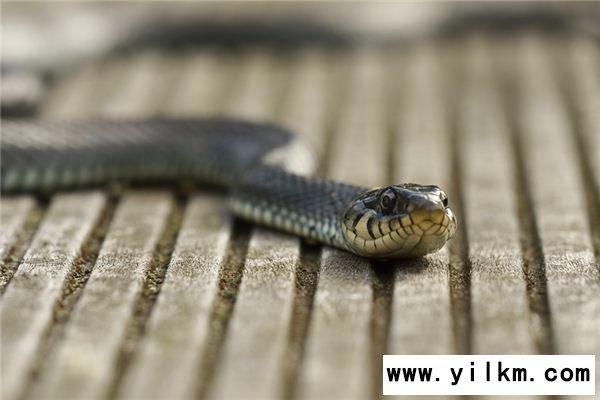 梦见水蛇是什么意思