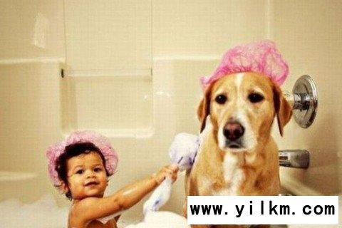 梦见别人给狗洗澡