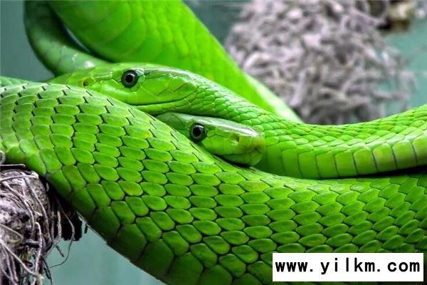 梦到两条蛇