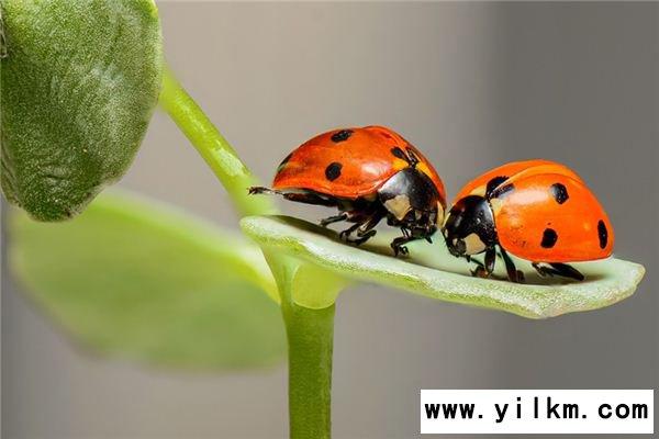 梦见昆虫是什么意思