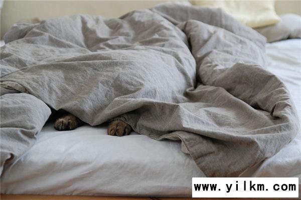 梦见毯子是什么意思