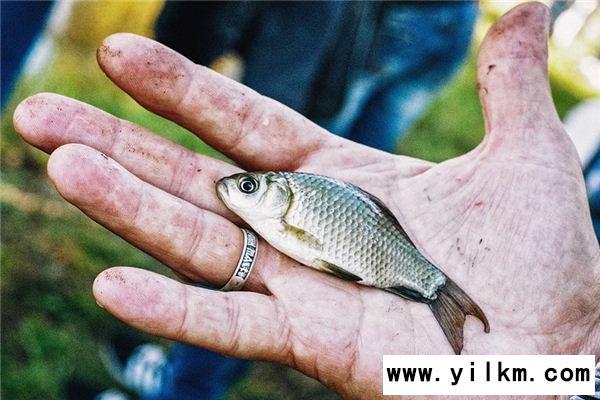 梦见抓鱼是什么意思