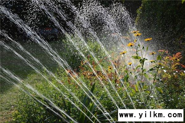 梦见灌溉是什么意思