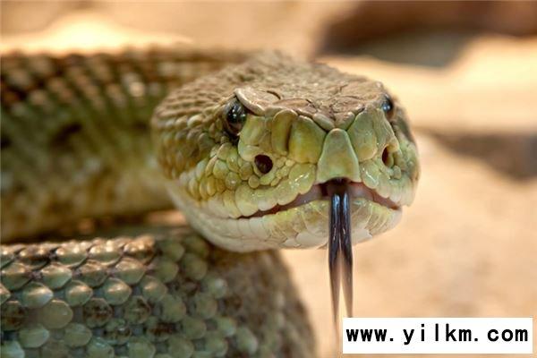 梦见把蛇打死了是什么意思