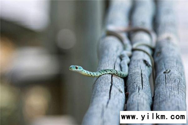梦见捉蛇是什么意思