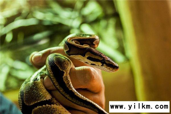 梦见杀蛇是什么意思